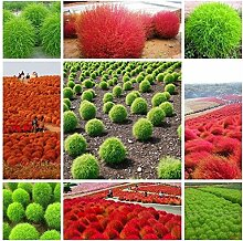 Shopmeeko Gras bonsai mehrjährige 100 stücke
