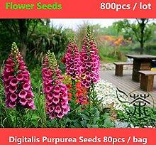 Shopmeeko ^^ Herbaceous Staude Digitalis Purpurea