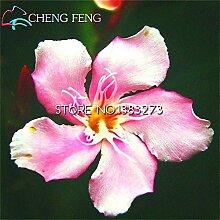 Shopmeeko Promtions 50 stücke Nerium bonsai
