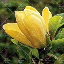 Shopmeeko Samen: 10 Stück Rosa Magnolien