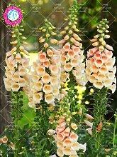 Shopmeeko Seeds: 100PCS Seltene Farbstile