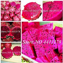 Shopmeeko SEEDS: 200 PC/bag Red Pitaya Bonsai