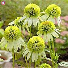 Shopmeeko Seeds: 50pcs-Rare Farbe Echinacea