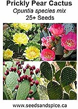 Shoppy Star: Feigenkaktus Mix (Opuntia) 25+ Seeds