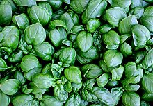 Shopvise 39G Kopfsalat-Blatt-Basilikum-Samen ~