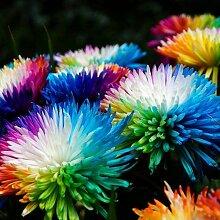 Shopvise Chrysanthemum Blumensamen 20Pcs