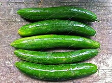 Shopvise Gurke Fruchtsamen 20Pcs / Beutel; Farbe 4