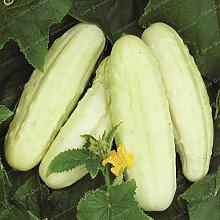 Shopvise Gurke Fruchtsamen 20Pcs / Beutel; Farbe 9