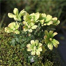 Shopvise Silk Cosmos Samen Blumen-Blumenstrauß