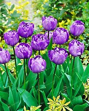 Shopvise Tulip Blumensamen für Hausgarten-10Pcs;