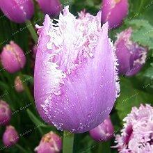 Shopvise Tulpe Blumensamen Für Hausgarten 10
