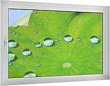 Sichtschutz Blatt mit Wassertropfen B x H: 60cm x 40cm von Klebefieber®