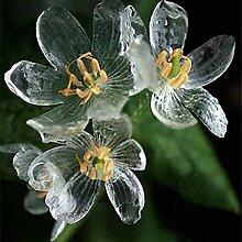 Skeleton Blumen Samen 100pcs Astilboides tabularis