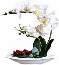 Snatchcz Phalaenopsis-Bonsai-Baum Im Quadratischen