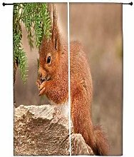 Snoogg Cute squarril Polyester Drapes Verdunklungsvorhänge 76,2cm W x 152,4cm L (Set von 2)
