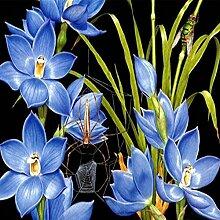 socoola DIY Diamant Stickerei Orchidee Foto 5D