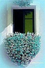 SONIRY 100 Stück Creeping Thyme Bonsai Flower
