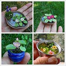 SONIRY 2ST Mini Lotus Bonsai Mini-Wasser Flores