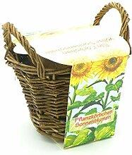 Sonnenblumen Anzuchttopf - Ein Körbchen voller