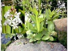 Sortiment 60 ++ Jetzt Kaufen im Frühjahr ab April wird geliefert. 1,98 € pro Pflanze