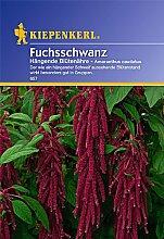 Sperli Blumensamen Fuchsschwanz Hängende