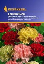Sperli Blumensamen Landnelken gefüllte Mischung,