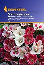 Sperli Blumensamen Sommerazalee Godetia Mischung,