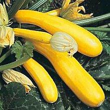 Squash Sommer - Gold Rush Gemüsesamen