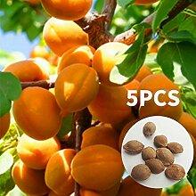 SSXY 2 Beutel Samen, Mandel Samen Aprikosenbaum