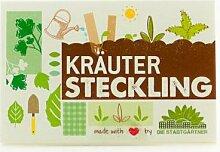 Steckling Kräutersamen, 10 Stück