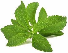 Stevia/ca. 100 Samen/Zuckerersatz/für Garten oder