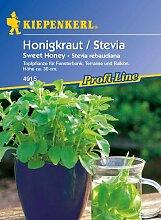 Stevia/Honigkraut 'Sweet Honey'