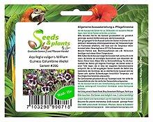 Stk - 15x Aquilegia vulgaris William Guiness