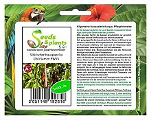 Stk - 2x Sibirischer Hauspaprika Samen Saatgut