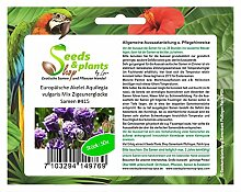 Stk - 50x Europäische Akelei Aquilegia vulgaris