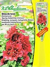 Stockrose 'Spring Celebrities Crimson '