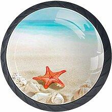 Strand Ozean Muschel Seestern 4 PCS