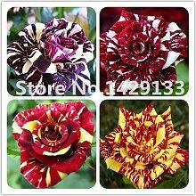 Streifen Strauchrose Blumen-Samen 200PCS Rare Bush