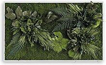 styleGREEN Pflanzenbild: Pflanzeninsel 100x60cm