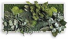 styleGREEN Pflanzenbild: Pflanzeninsel 57x27cm
