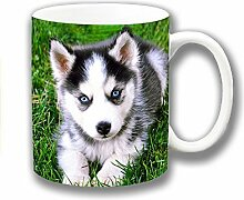 süß Husky Hündchen blauen Augen Grau Weiß