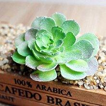 Sukkulente Samen Kaktusblumensamen Hochzeit