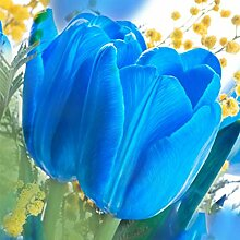 SummerRio 20//50 St/ück Tulpe Samen Tulpenzwiebeln Ziertulpen Blumen Bunte Tulpen Seeds Blumensamen Garten Balkon