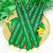 Sump 100Pcs Gurke Gemüsesamen für schöne