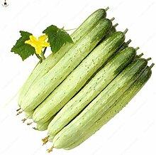 Sump 100Pcs Gurke Gemüsesamen für schönes