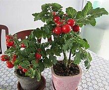 Sump 200pcs Tomate Gemüsesamen für schönen
