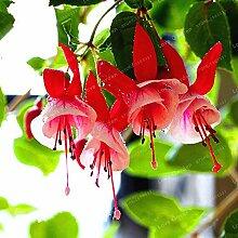 Sump Fresh 100pcs Double Petals Fuchsia
