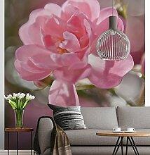Sunny Decor - Fototapete BOUQUET- 184 x 254 cm