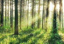 Sunset in the Woods - Vlies Foto-Tapete Wallpaper 366x254cm - 8-teilig Beigelegt sind eine Packung Kleber und eine Klebeanleitung. Made in Germany.