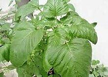 SVI 100 Stück jamaikanische Callaloo Pflanze Samen